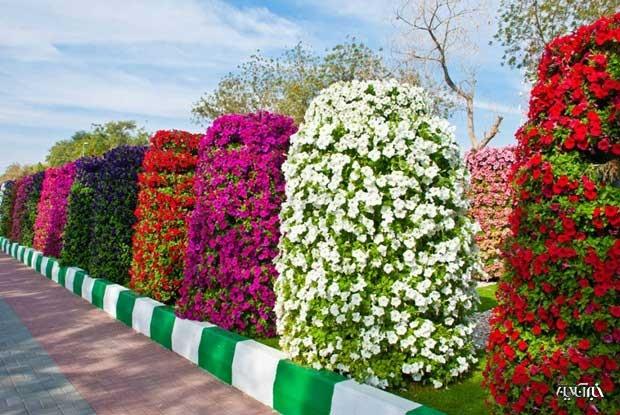 نتیجه تصویری برای زیباترین باغهای گل جهان